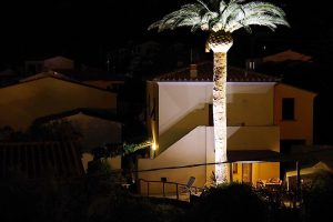 Esempio Illuminazione Palme